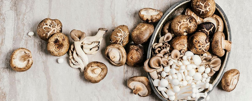 What Mushrooms Are Most Useful for Our Health?