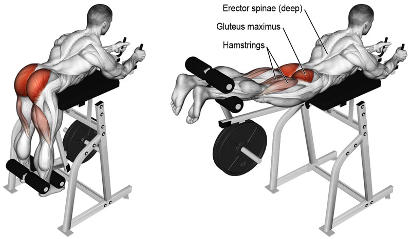 erector spinae, gluteus maximus, hamstrings muscles