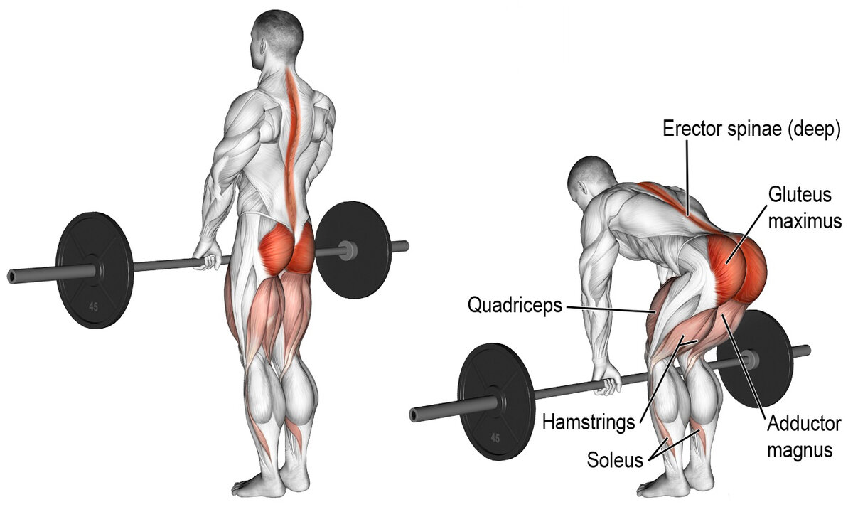 muslces worked while doing rack pulls