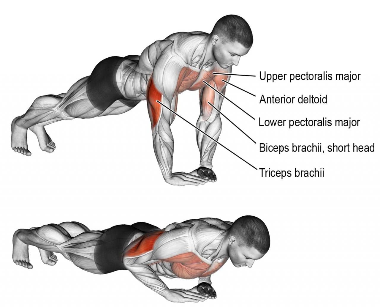 what muscles are worked during diamond push ups